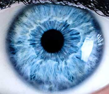 Die Iris enthält nicht nur Struktur sondern auch fälschungssichere FarbinformationenStephanieFrey/bigstock:COM
